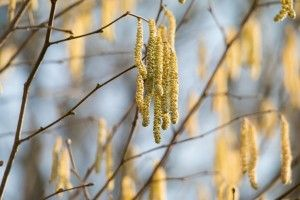 Heuschnupfen: Müssen Allergietests hinterfragt werden?