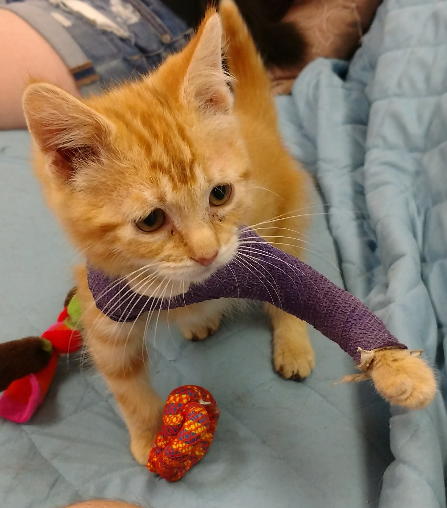 This Kitten Is Recovering From An Injured Leg He Didn T Let The Splint Slow Him Down Kitten Cats And Kittens Kittens