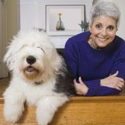 How To Clean White Hair Around A Dog S Mouth Dog Bearding White Dogs English Sheepdog Puppy