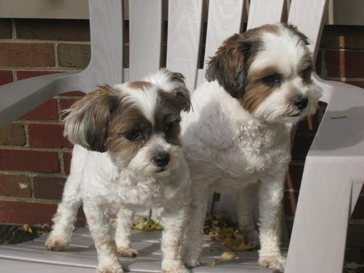 Adopt coco and moxi bonded on petfinder terrier mix