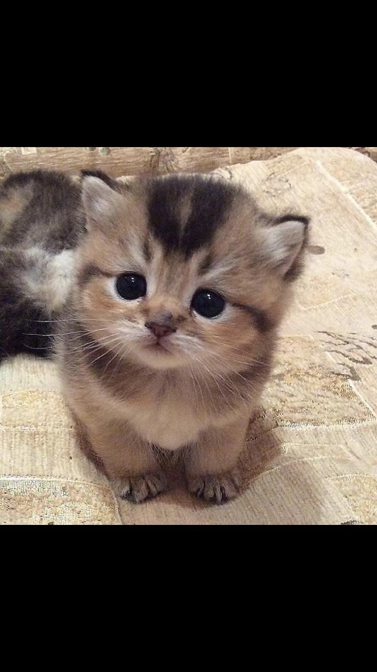 Cybergata Kitten By Anna Romanova On 500px Katzen Lustige Tiere Haustiere
