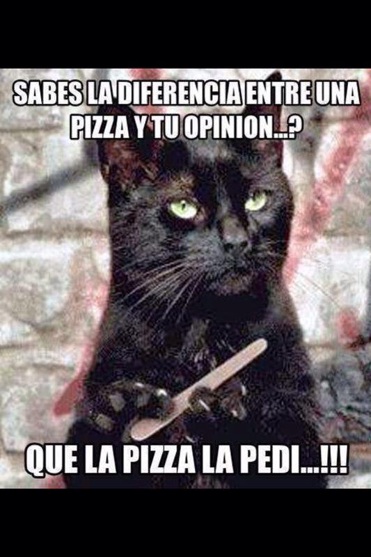 saoper cat