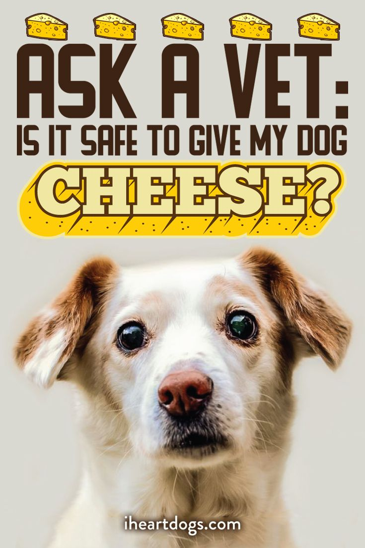Ask a vet is it safe to give my dog cheese socializing