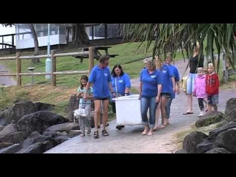 Australian Seabird Rescue  Turtle Release