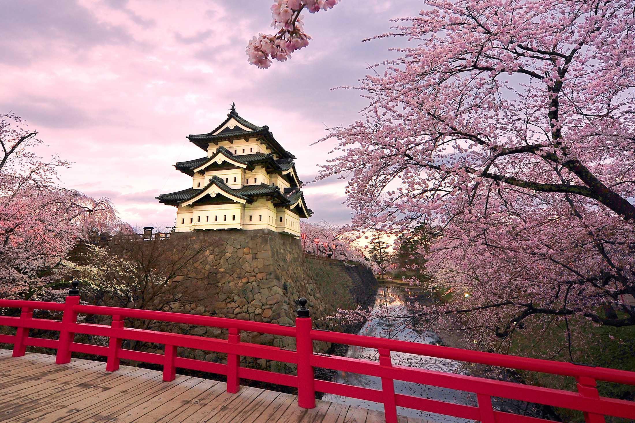 Supreme Capital Group Japanese Landscape Cherry Blossom Japan Cherry Blossom Painting
