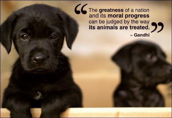 Animals Love Quote Gandhi Healthy Pets Zitate Tiere