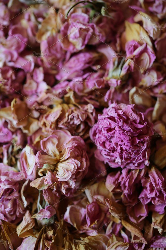 Dried roses by The Little Wild Apple on @creativemarket