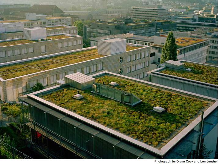 Under The New Gaian Regime No Roof May Lie Fallow Green Roof Living Roofs Green Roof Design