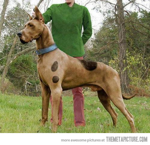 "Real life Scooby-Doo! My daughter saw this and said the same thing - ""Mommy a real Scooby-Doo!"""