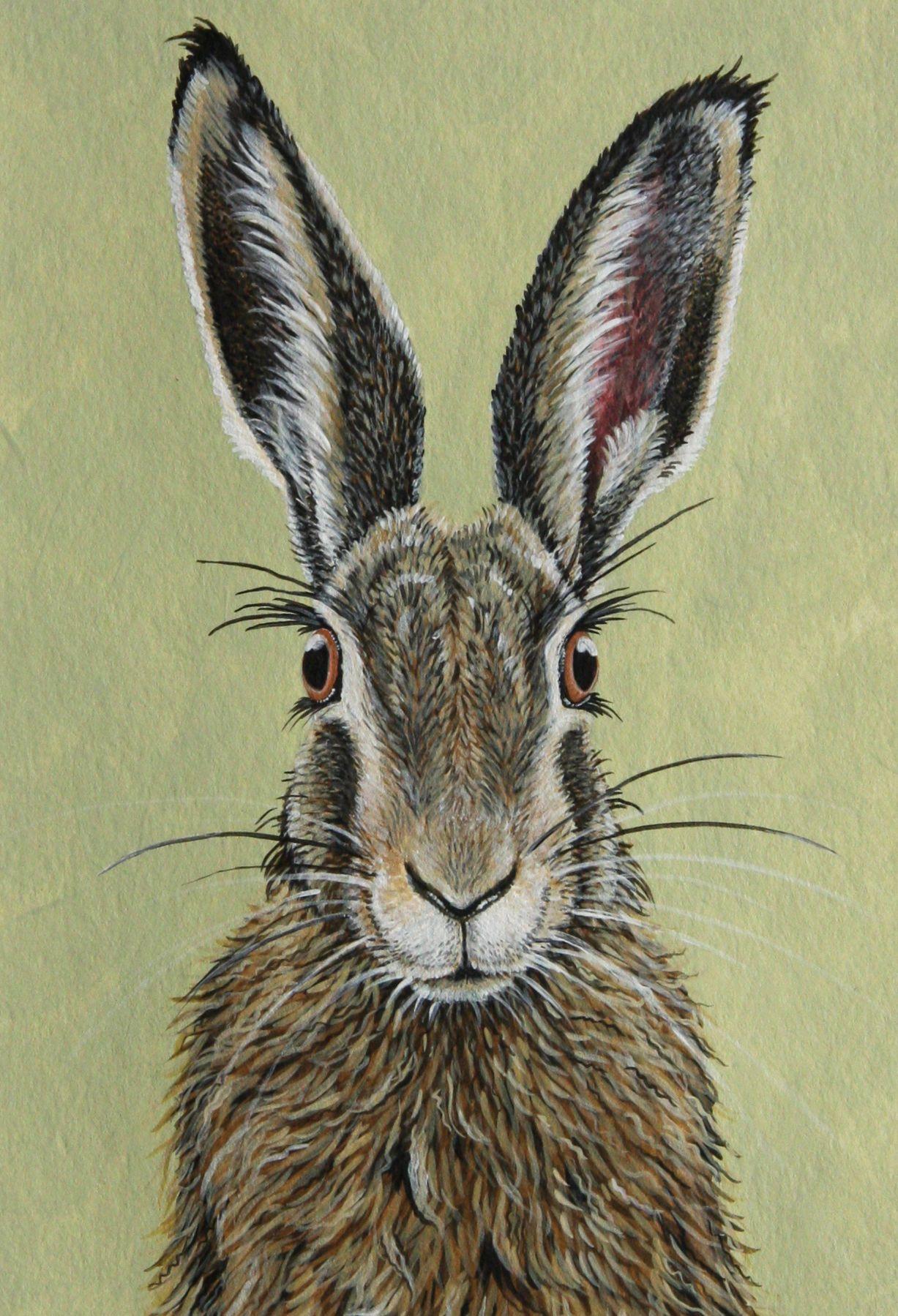Feldhase | Feldhase, Häschen kunst und Kaninchen kunst