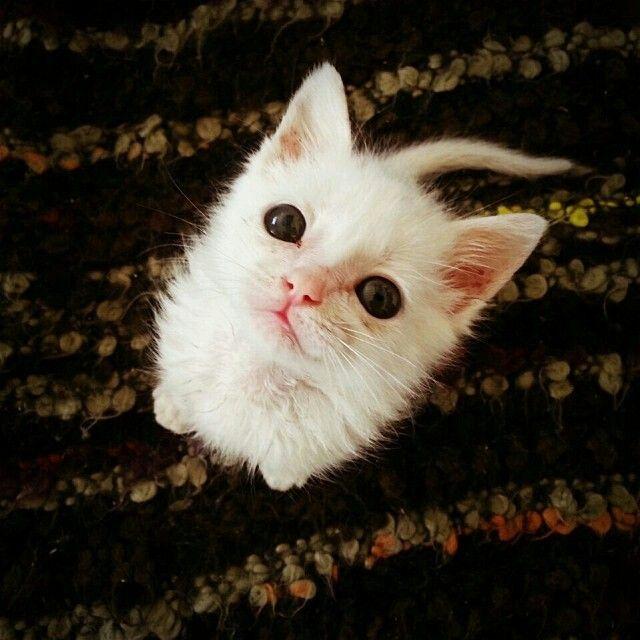 Su gatito