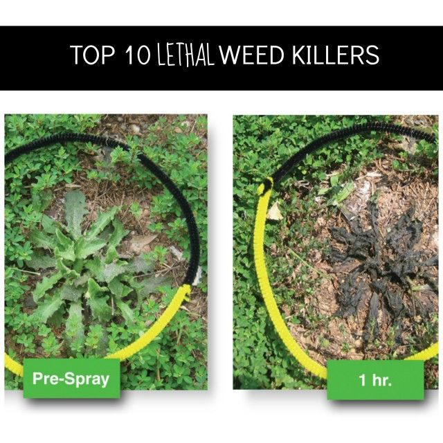 Top 10 Lethal Homemade Weed Killers Gardening