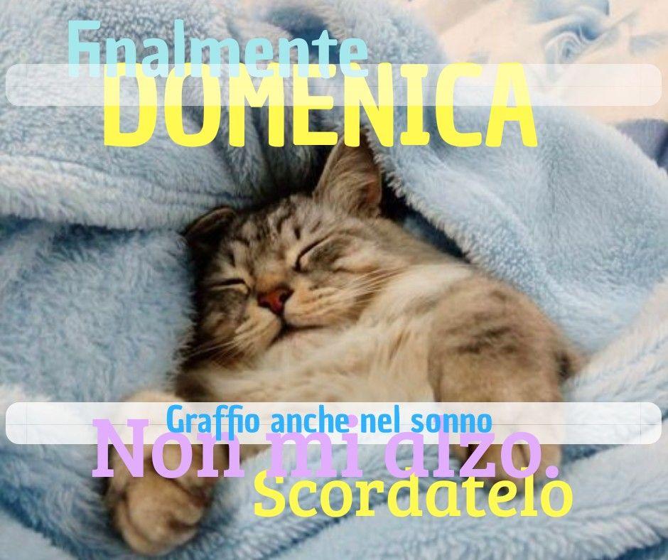 Buongiorno buona domenica saluti amici sonno riposo for Buongiorno con gattini