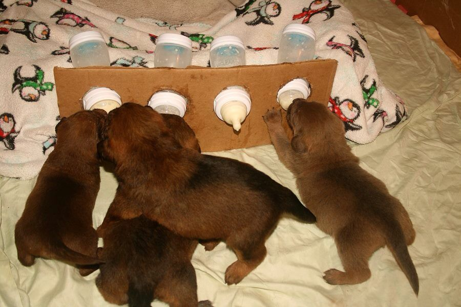 Good To Know Puppies Feeding Babies Bottle Fed Whelping Puppies Dog Breeding Kennels Dog Breeds