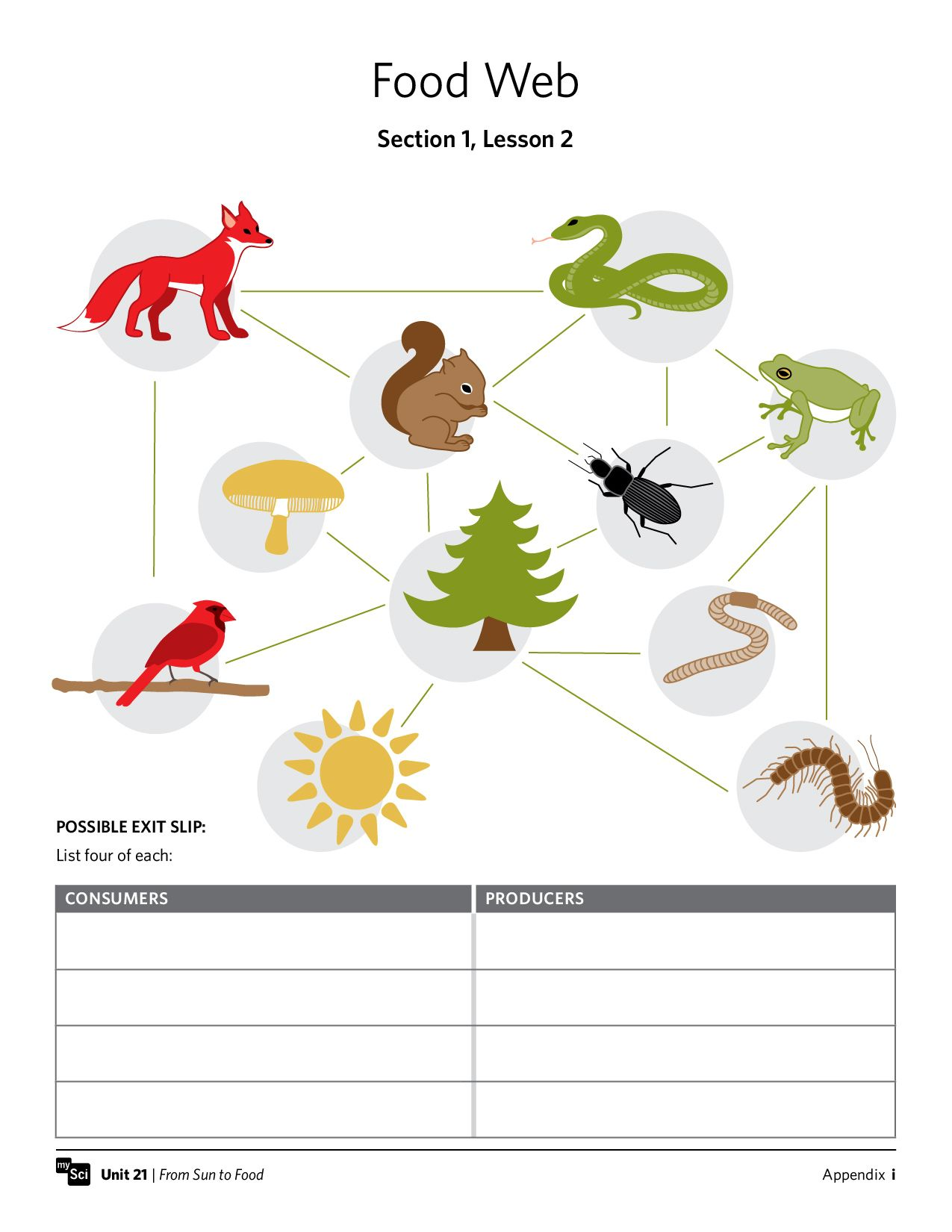 Mysci unit 21 from sun to food preview food webs worksheets life science photosynthesis respiration and ecosystems how do energy and matter flow through an ecosystem pooptronica Image collections