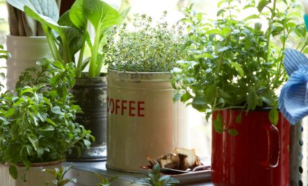 16 DIY Container Garden Ideas | Care2 Healthy Living