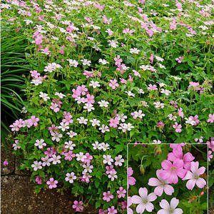 Pflanzenwahl bei Trockenheit und Hitze
