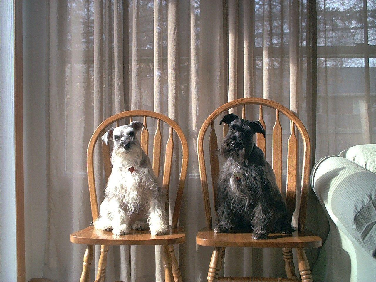 Bailey and Shadow...waiting....