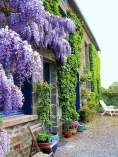 My Inner Landscape Outdoor Gardens Wisteria Garden