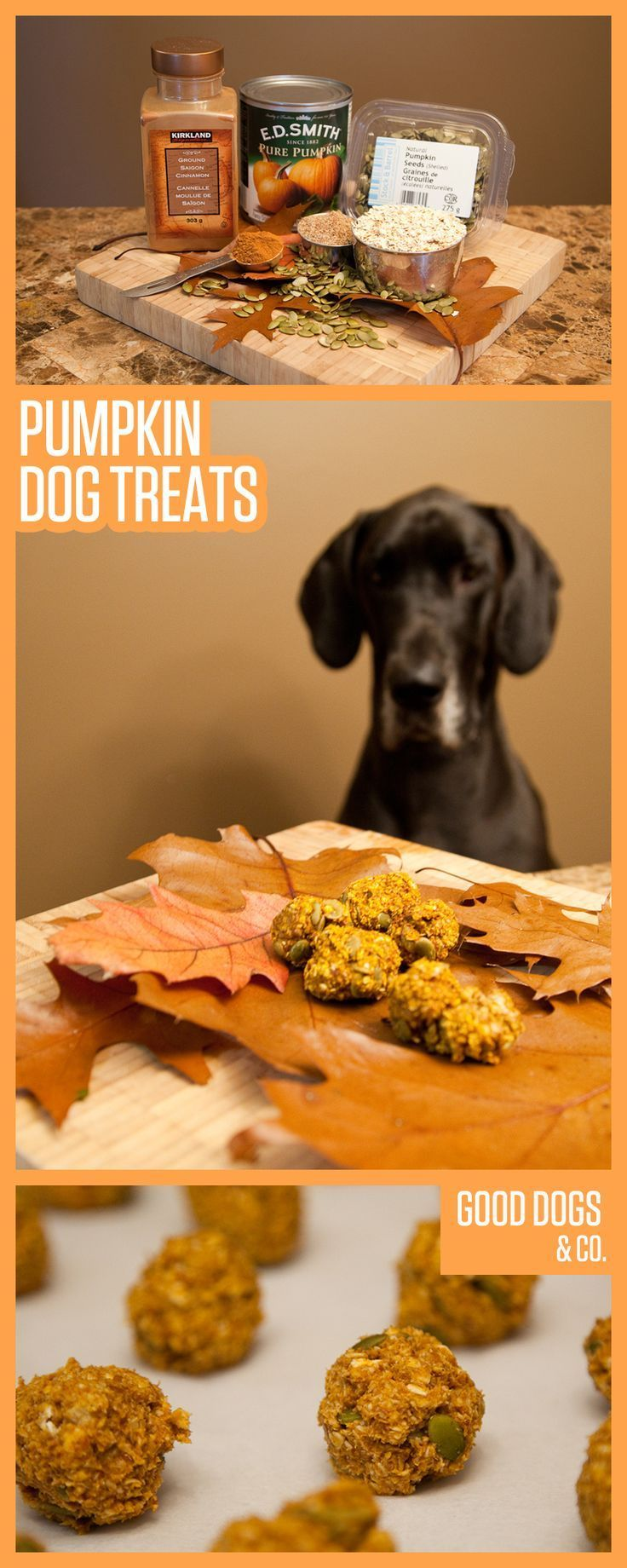 Pumpkin Dog Treats - Did you know pumpkin puree AND pumpkin seeds are safe and healthy options for your pup? These treats have all that good stuff and more!