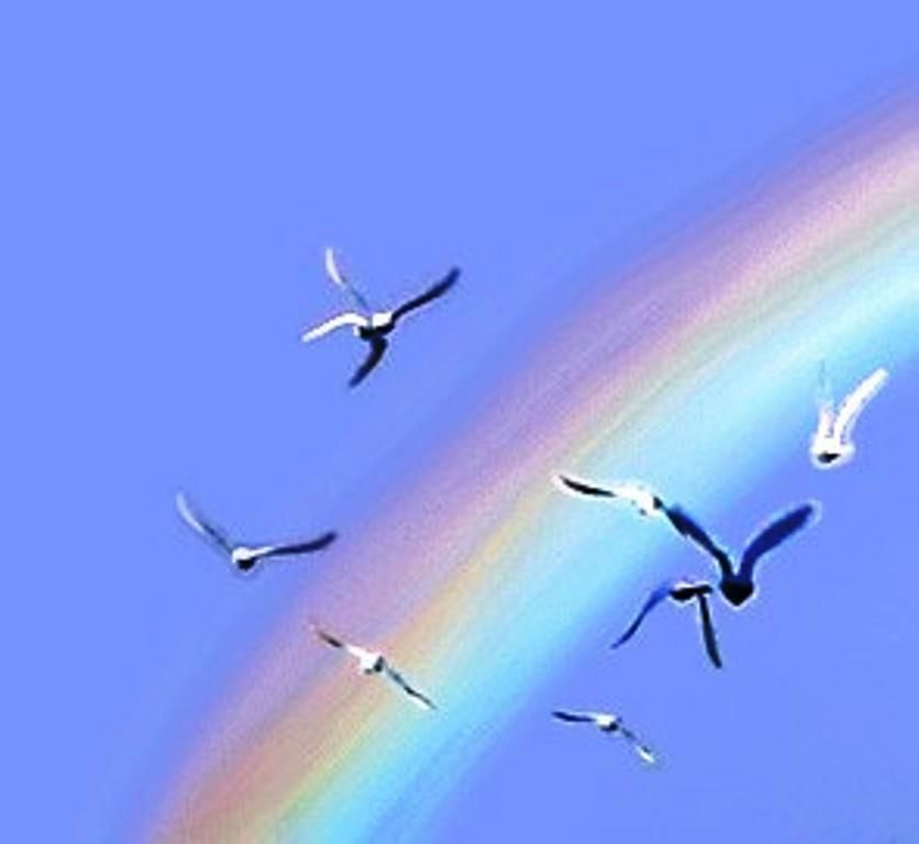 Take A Lesson From The Birds They Do Not Think Like Flying On Open Their Wings And Fly They Take The Momentum A Over The Rainbow Somewhere Over Blue Bird