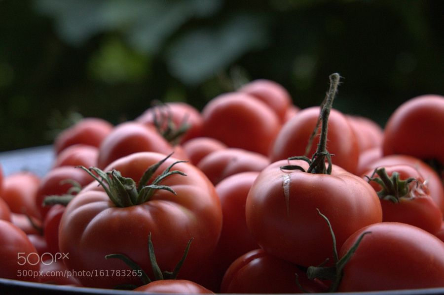 Tomatos by katalinbolcskei #food #yummy #foodie #delicious #photooftheday #amazing #picoftheday
