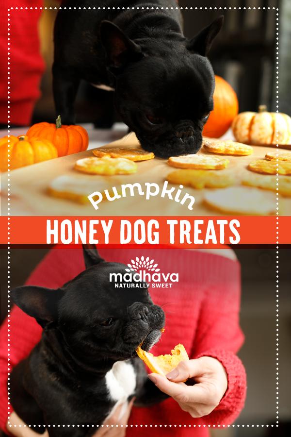 Pumpkin Honey Dog Treats Dog Treats Pumpkin Dog Treats Dogs