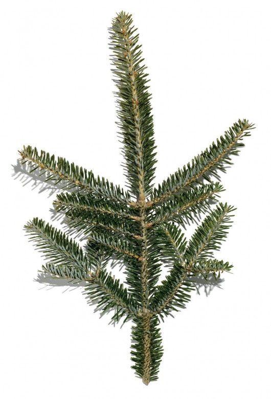 Christmas Tree Guide | Christmas tree guide, Christmas in ...