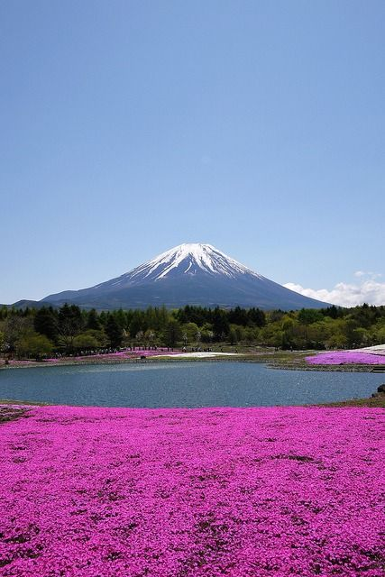 yuikki: 富士芝桜まつり Fuji Shibazakura… l kagami