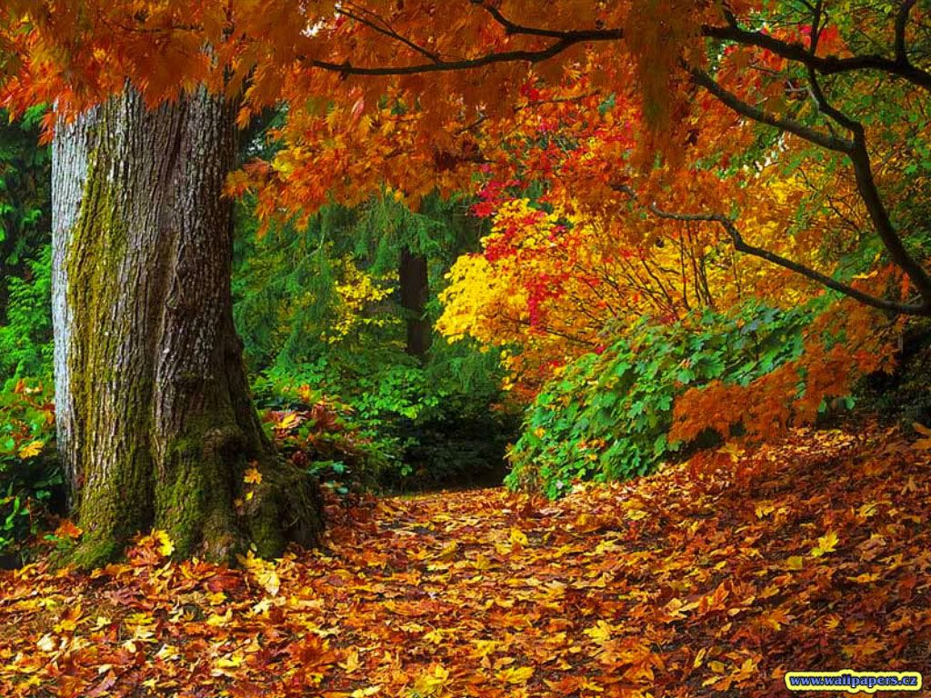images of fall trees - Google Search | Autumn | Pinterest | Fall trees