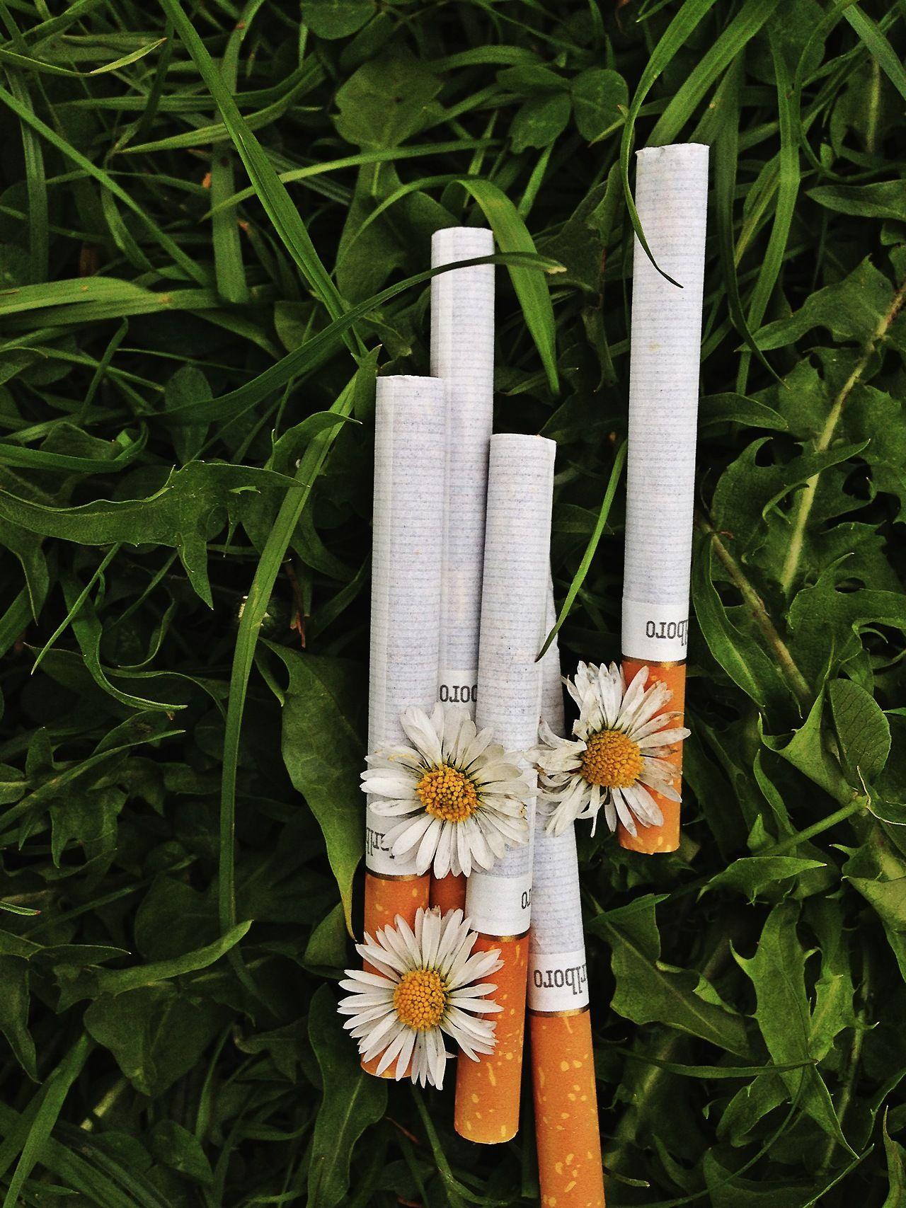 этих топовые сигареты картинки окутала