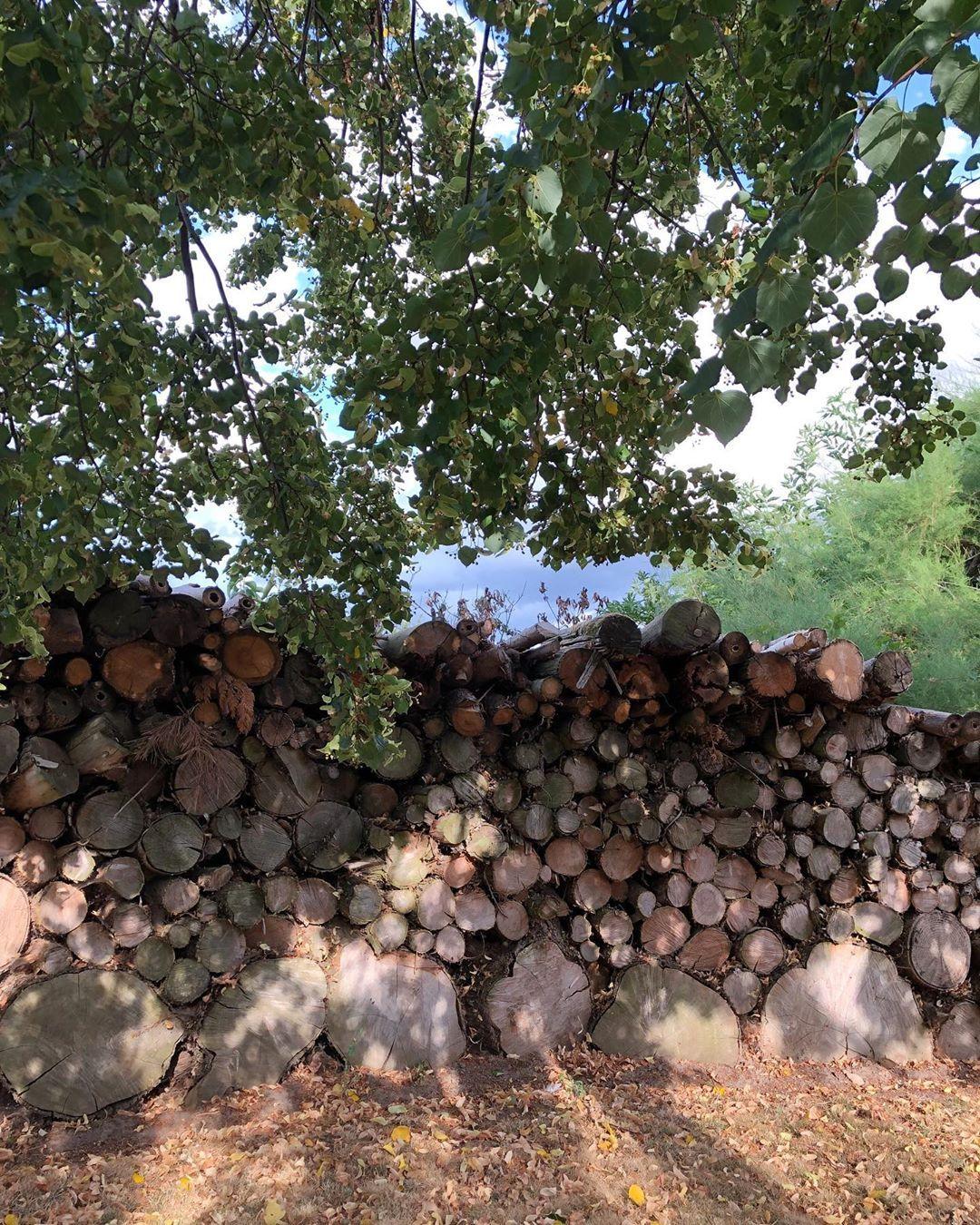 Baumstamme Als Sichtschutz Zuhause Im Garten Eine Schone