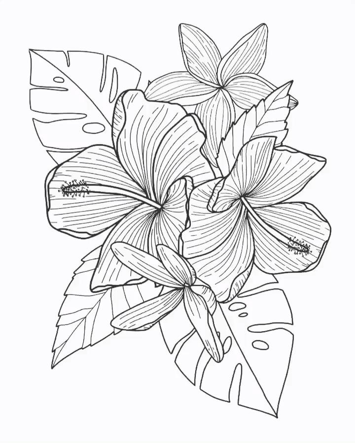 Flower Drawing App: Floral Illustration On IPad Pro/apple Pencil/procreate App