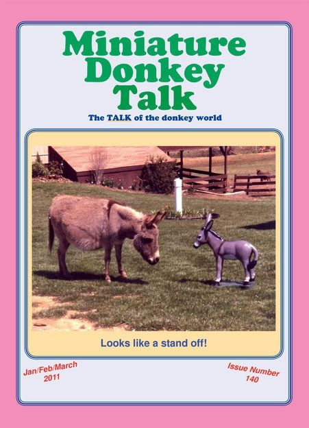 Image result for Miniature Donkey Talk