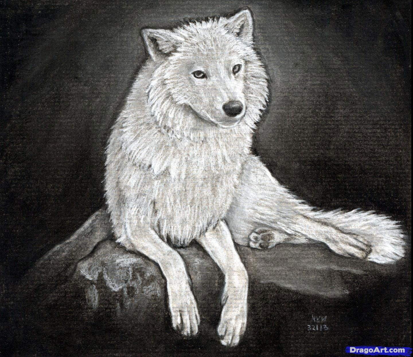 How to Sketch a Wolf, Arctic Wolf   Crafts, Art, Drawing & Painting ...