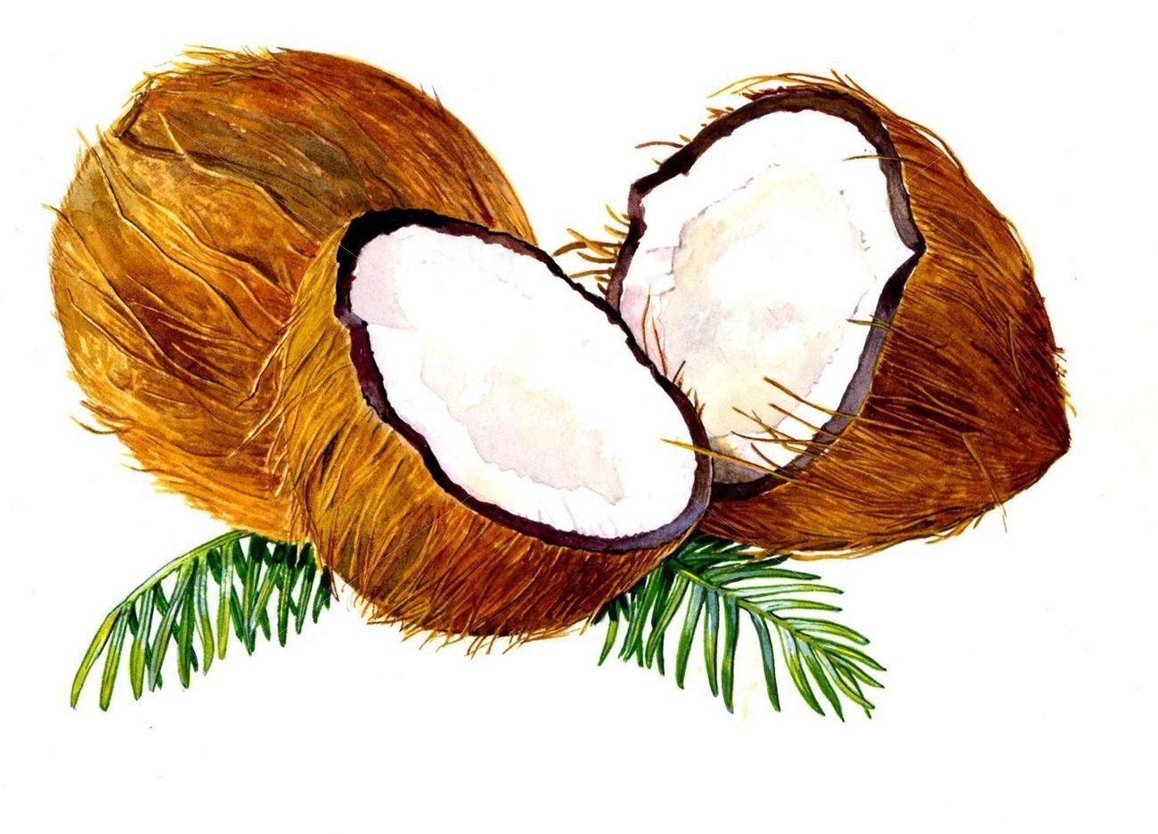 здорово, рисунок кокоса карандашом электрорадиолом