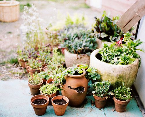 Potted plants - small garden