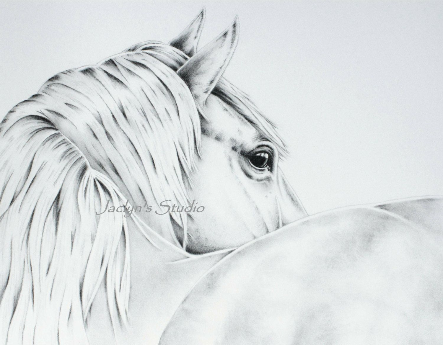 pin by katherine bishop on horses pinterest horse