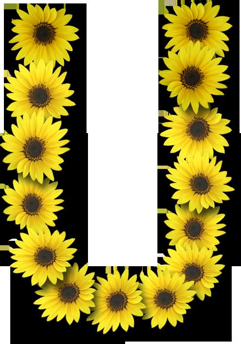 Alfabeto Sunflowers U Alpha Flowers Alphabet Alphabet