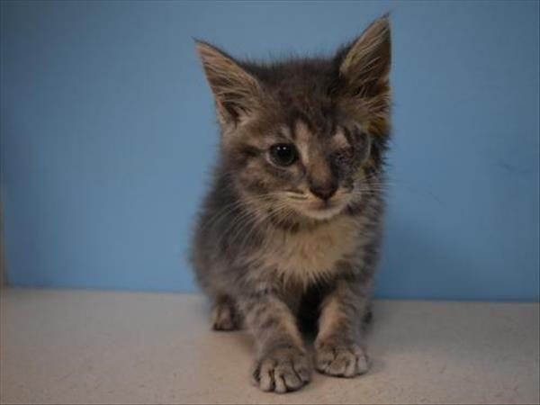 Adopt Zoe On Cat Adoption Help Homeless Pets Pet Adoption