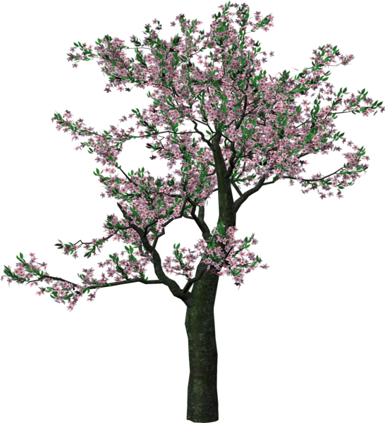 Large Spring Tree Clipart Tree Art Tree Clipart Spring Tree