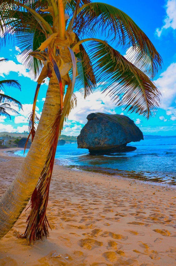 ✯ Bathsheba - Saint Joseph, Barbados