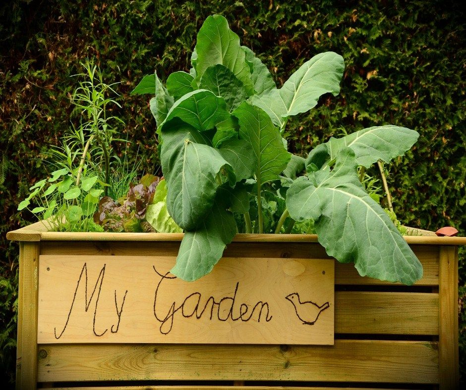 Raised Garden Beds That You Can DIY For Cheap Building