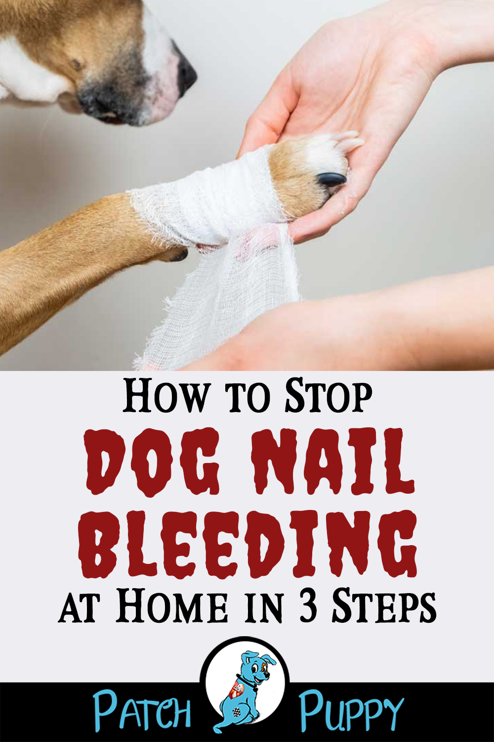 how to stop bleeding on a dogs toe nail