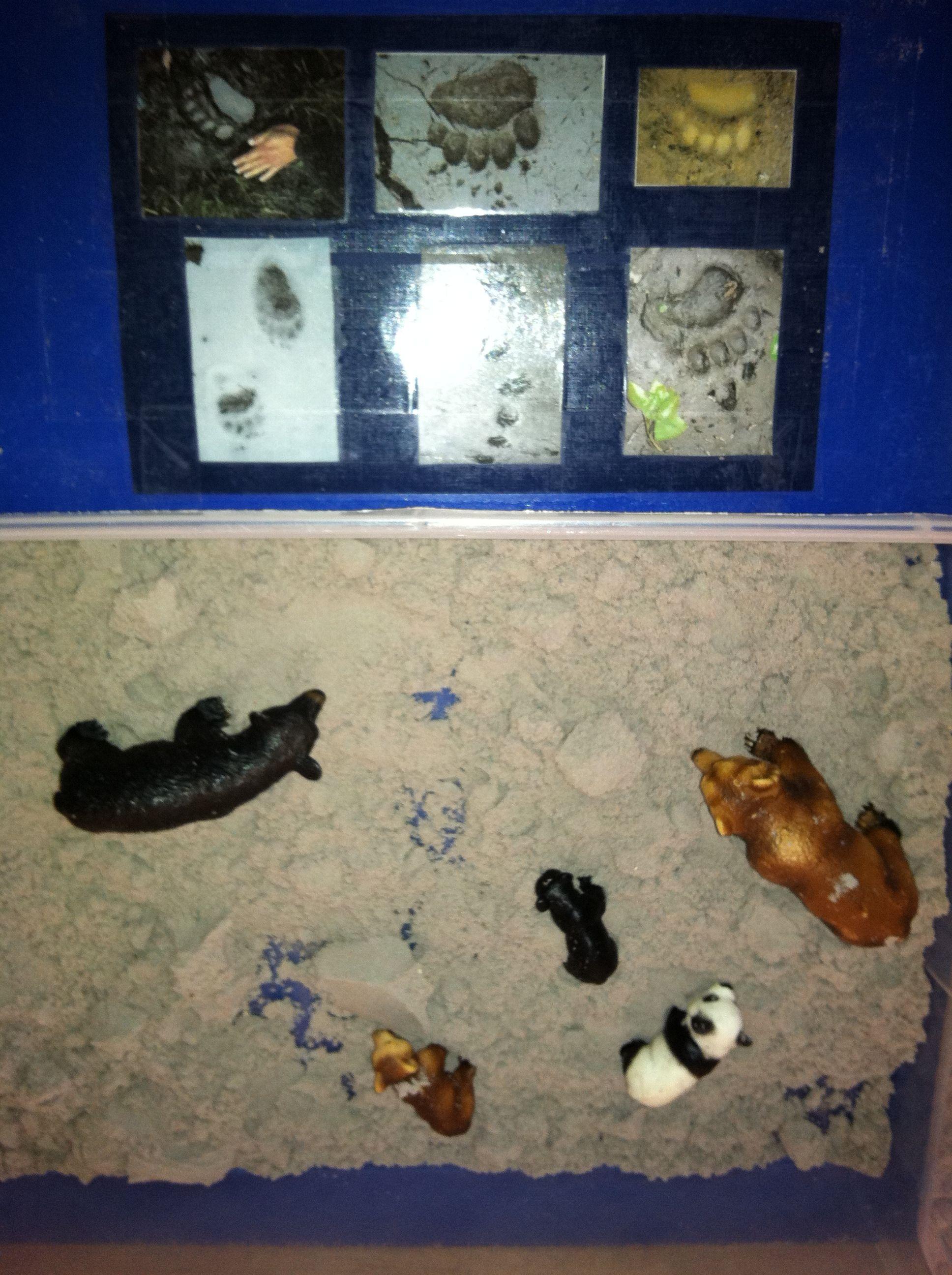 Bear Tracks sensory table