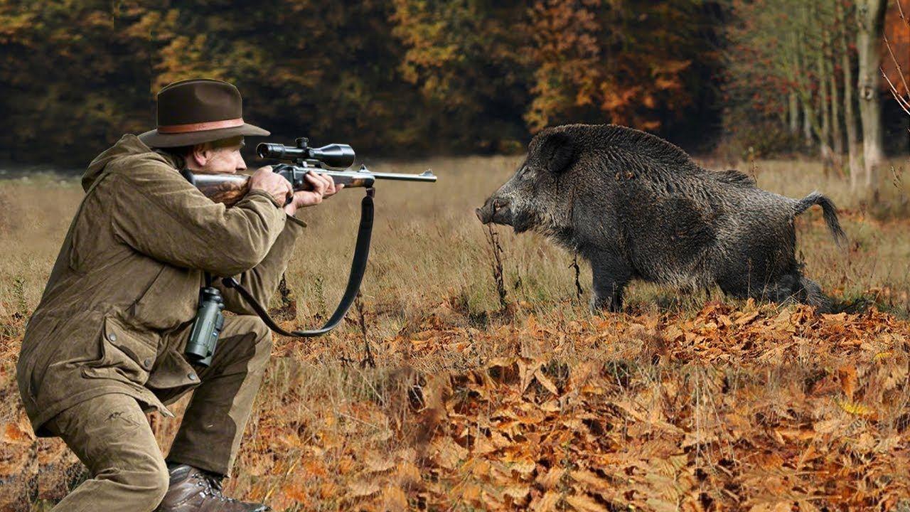 ильинке смотреть картинки охота на зверей тот момент