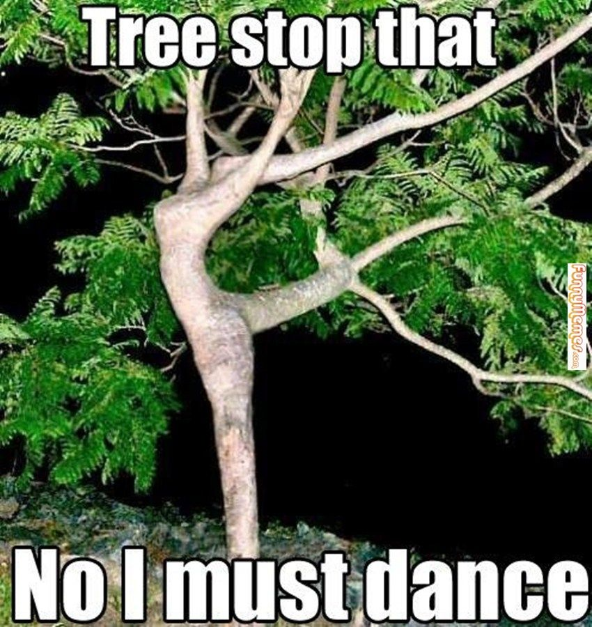Great Dance Quotes And Sayings Ballet Memes Nature Images Tree