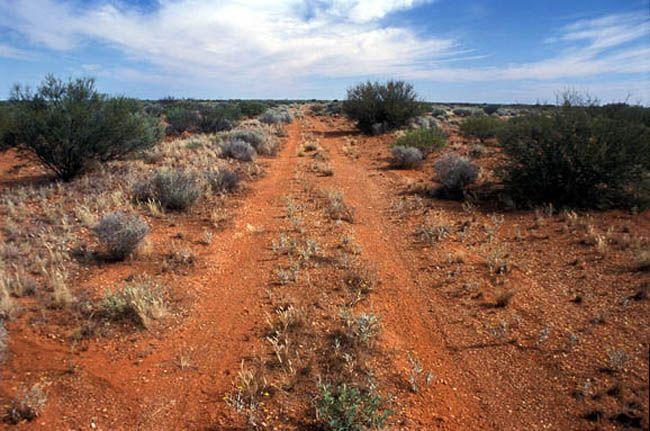 desert tracks - Google Search