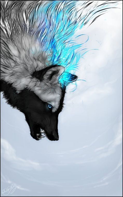 Skysoul:black And White Wolf With Blue Eyes.Cunning,loyal