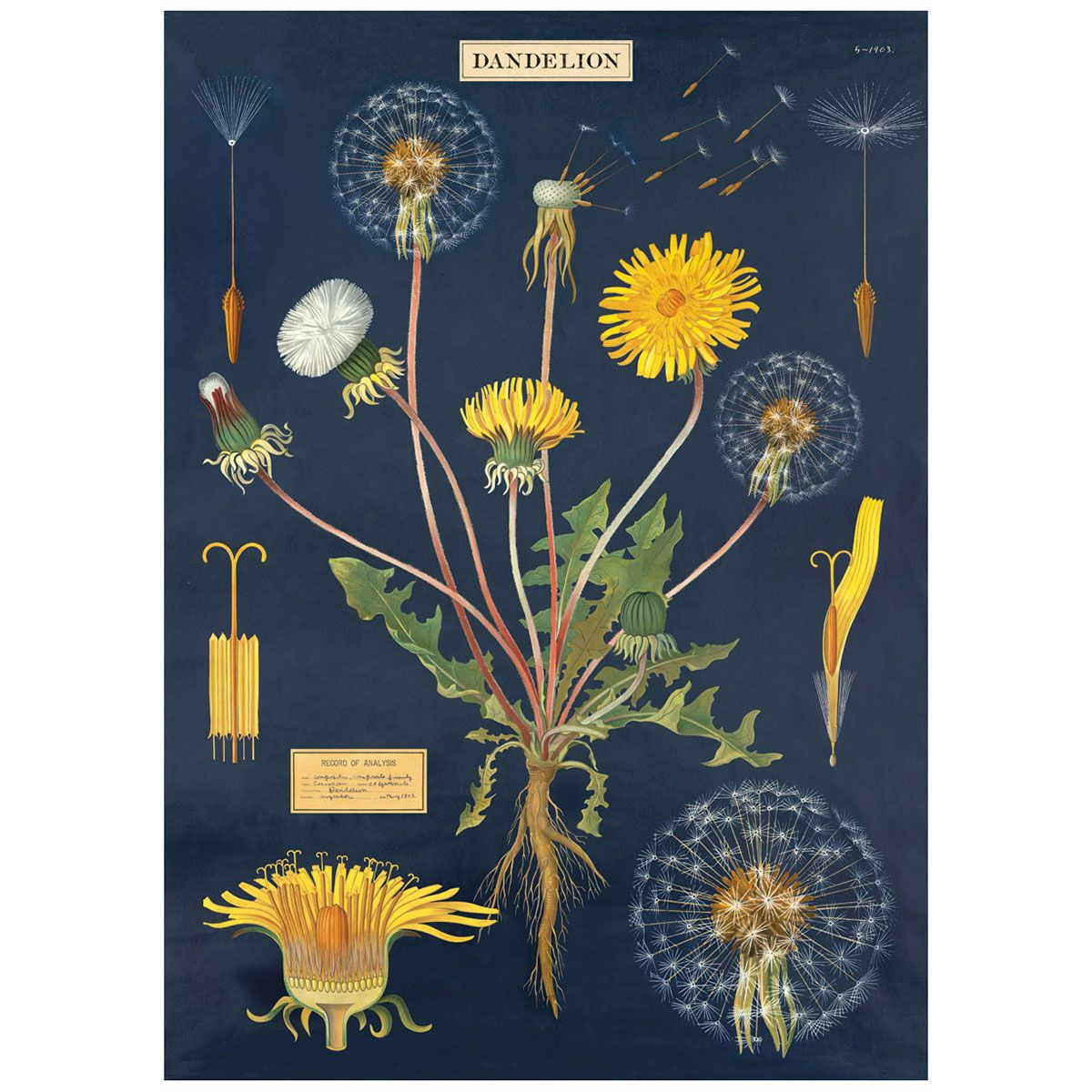 I Designed A Vintage Looking Border Art For You To Use In: Dandelion Plant Chart Vintage Style Poster In 2019